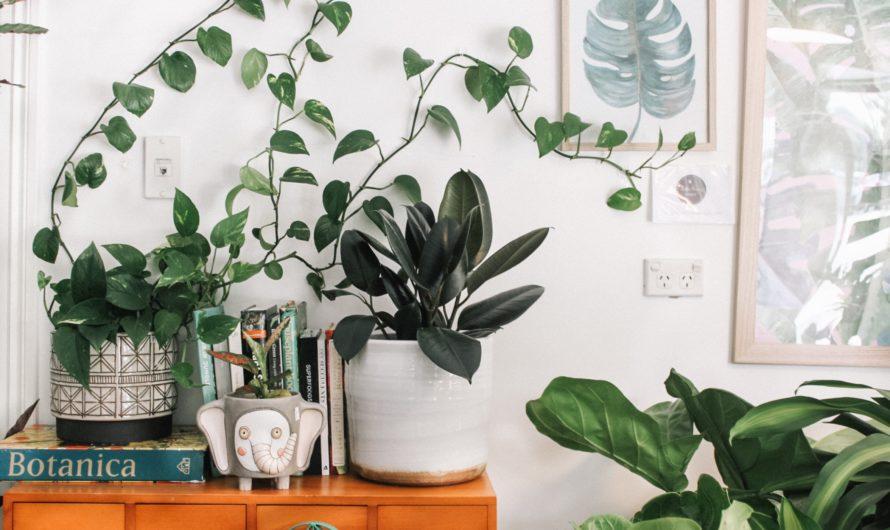 Les plantes pour garder une bonne santé mentale
